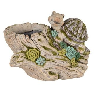Pol Echeveria Turtle Wood L38W20H29